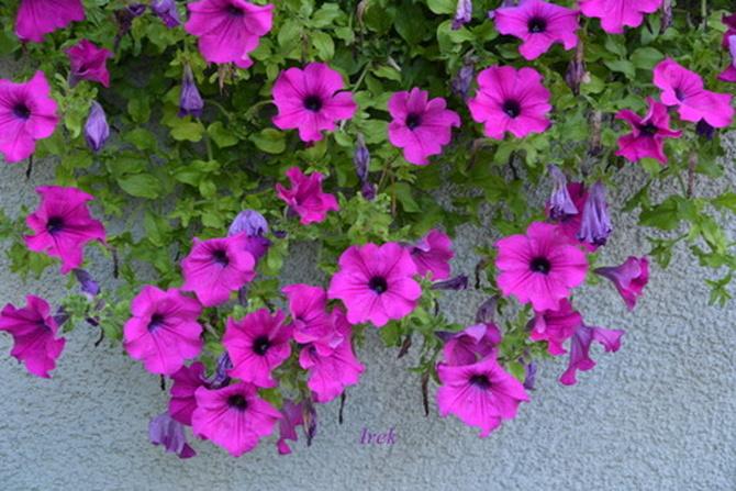 Kwiaty zwisające