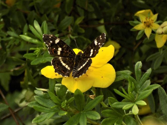 Mały wysyp motylków :)