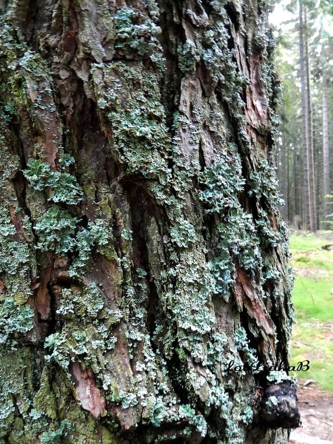 Porosty na korze drzewa