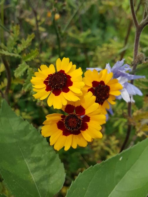Ulubione kwiatki....