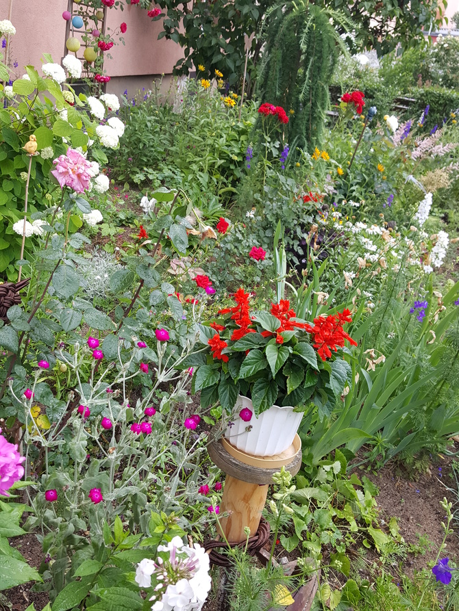 W ogródku przyblokowym....