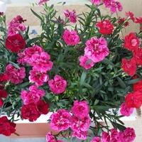 Ładne kwiatki kuzynki?