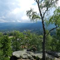 Brzoza na skale w górach