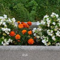 Donica z kwiatami na moim osiedlu