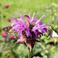 Dużo kwiatów, dużo motyli:)