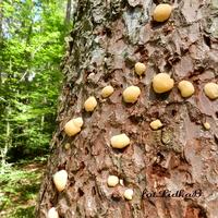 Grzyby na drzewie