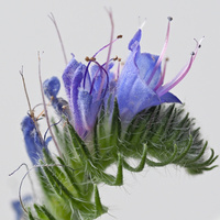 łąkowe kwiatki