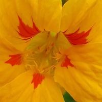 Kwiat malowany farbkami...