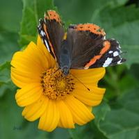 Kwiat z motylem