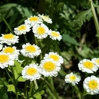 Kwiatowe sadzone;))