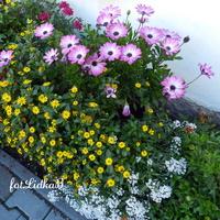 kwiatuszki....