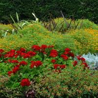 Kwiaty na klombie (fragment)