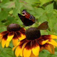 Motylowa kumulacja :)