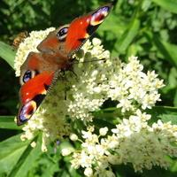 Nareszcie motylki :)