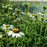 Ogród kwiatowo - ziołowy