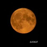 Pełnia Koźlego Księżyca