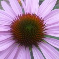W tonacji lila-róż! :)