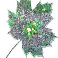 Zielony liść z różą
