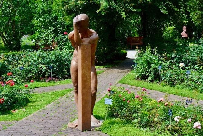 Róże w ogrodzie botan. pilnowane przez człowieka