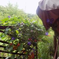 Kwiaty szukają miejsca pod dachem!