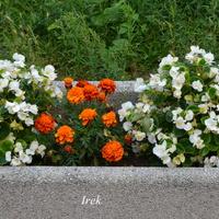 kwiaty w donicy