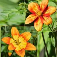 Malowane kwiatki uczepu:)