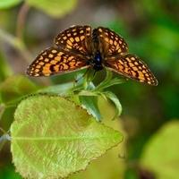 Motyl na listku
