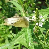 Motylki latają od kwiatka do kwiatka :)