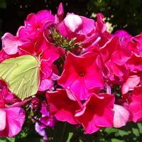 Motylki też je lubią :)