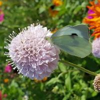 Motylków coraz mniej