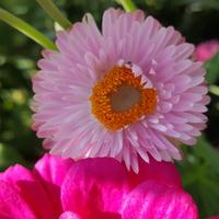 Na dobranoc kwiat