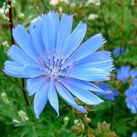 Pozdrawiam Was z porannym błękitem
