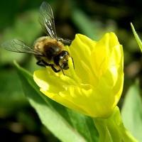 Uśmiech zadowolonej pszczółki:)