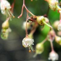 Żurawkowe kwiatuszki:)