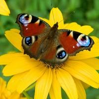 Za nektar ozdobił:)