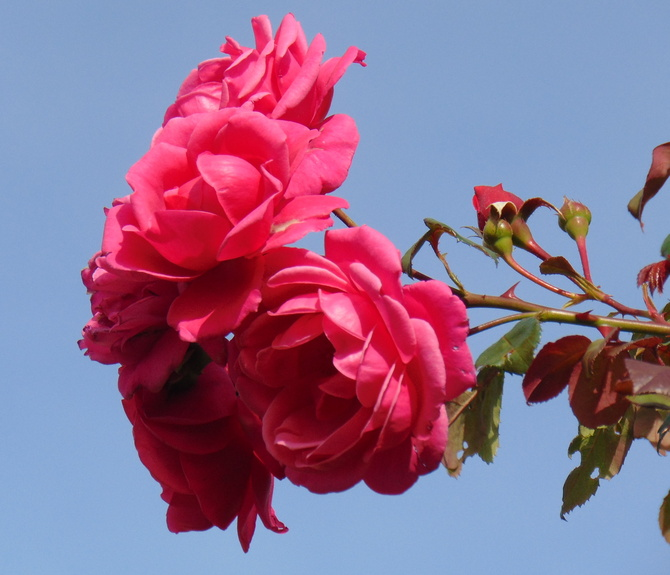Błękit i róża, dzisiejszy widok :)