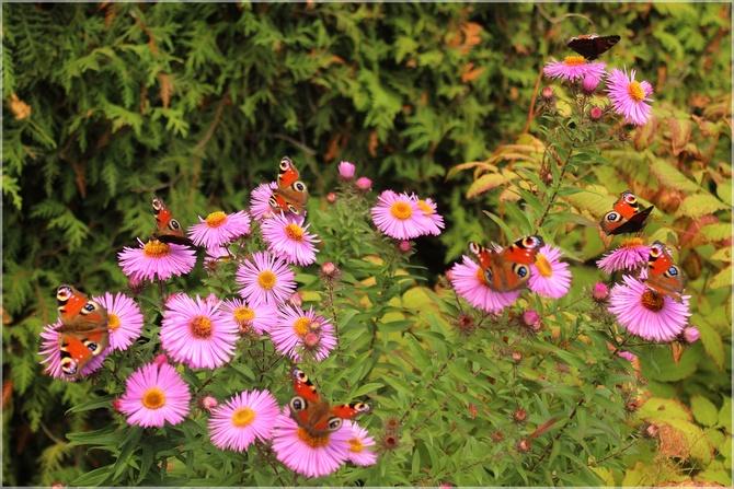 Motyli raj...