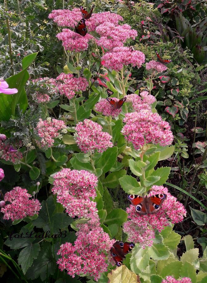Ogród pełen motyli