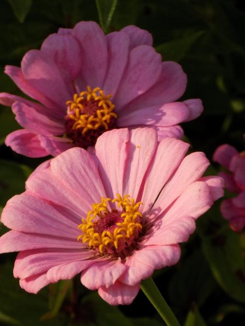 Różowych snów :)