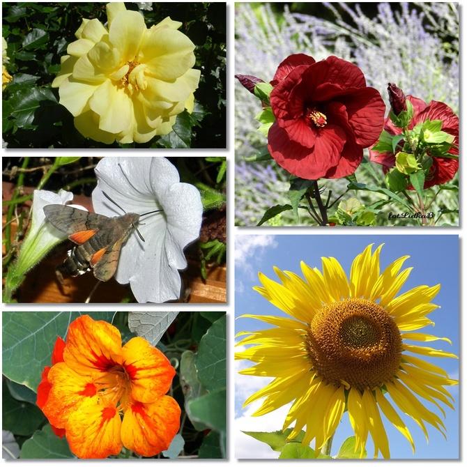 Słoneczne kwiaty lata 2021