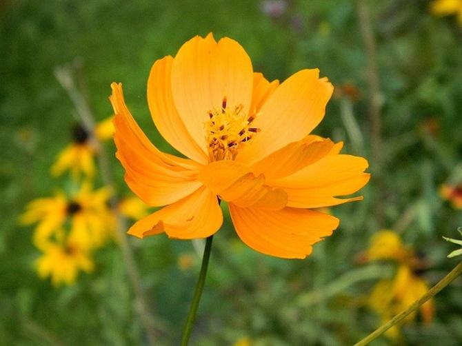 W słonecznym dniu, słoneczny kwiat:)