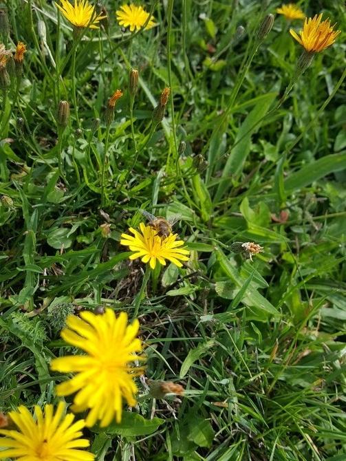 W trawie.....
