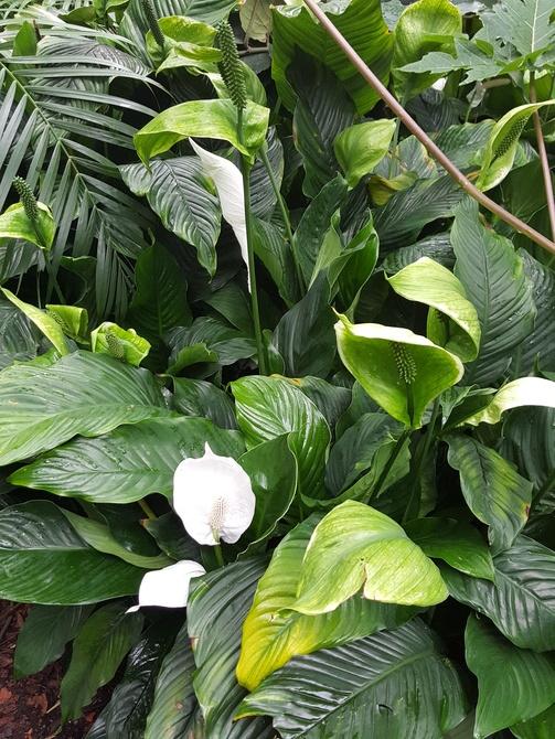Zielony kwiat.....