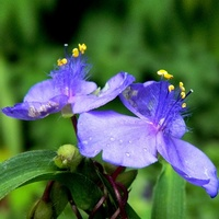 Błękit dziś tylko kwiatowy,