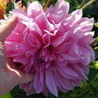 Duży kwiat...
