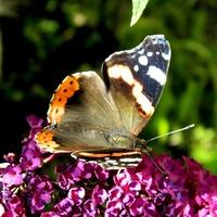 Gdy było słoneczko, były motylki:)
