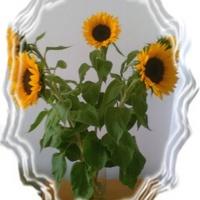 Jesienne słoneczniki