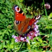 Motylki sobie używają :))