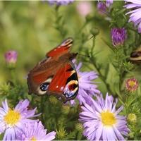Najwierniejsze motylki...