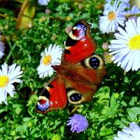 Pawiki objęły władzę w ogrodach i w galerii :)))